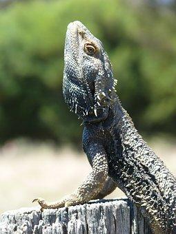 Dragon, Lizard, Reptile, Fence, Animal, Wildlife