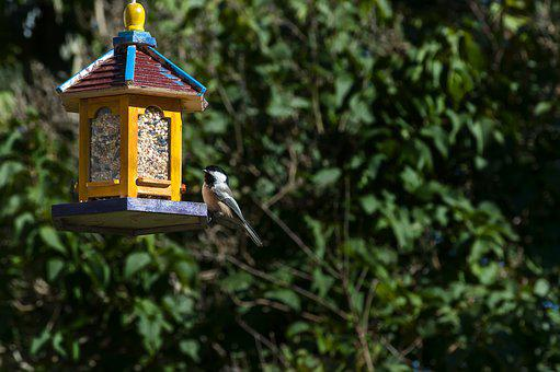 Bird Feeder, Bird, Backyard, Black-capped Chickadee