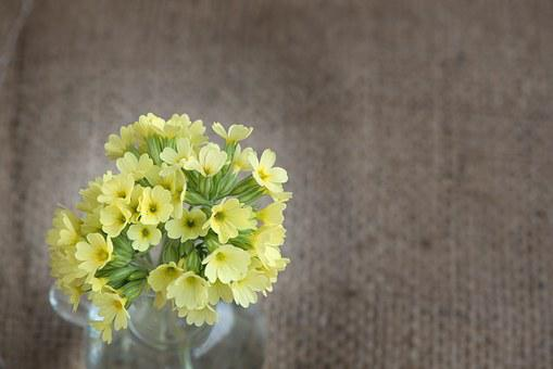 Cowslip, Yellow, Yellow Flower, Flowers, Yellow Flowers