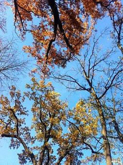 Deciduous Trees, Fall Foliage, Autumn Trees