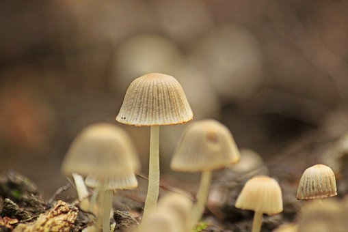 Mushrooms, Forest, Nature, Autumn, Forest Floor, Small