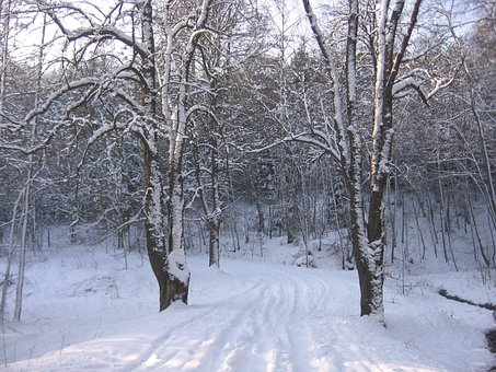 Snow, Winter, Road, Cold, Season, Frost, Snowy, Ice