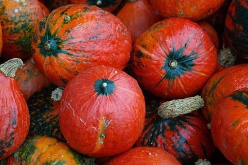 Hokkaido, Squash, Kabocha, Giant Pumpkin