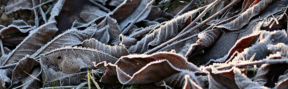Meadow, Ripe, Hoarfrost, Autumn, Cold, Frost, Icy