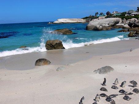 Penguin, Jackass Penguin, Sea Spray, Tropical, Sea