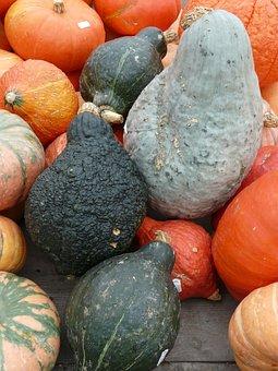 Pumpkins, Kuebismarkt, Pumpkin Species, Different