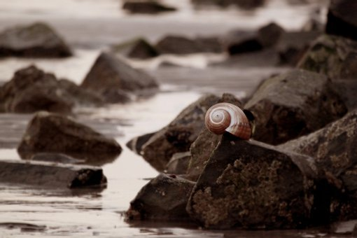 Shell, Snail, Snail Shell, Nature, Animals, Animal