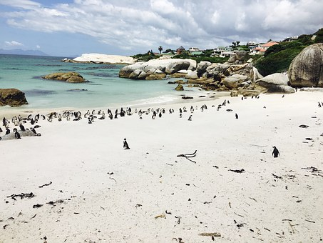 Penguins, South Africa, Bay, Boulders Beach, Sand, Rock