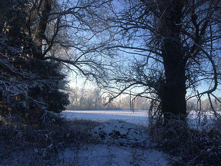 Wintry, Snow, Morgenstimmung In Winter, Trees