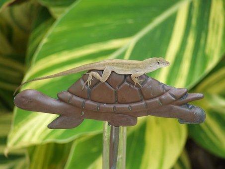 Lizard, Turtle, Animal, World, Anole