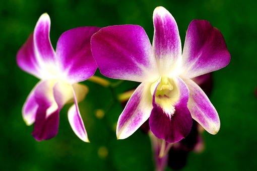 Flower, Orchid, Botany, Bloom, Blossom