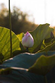 Flower, Nature, Pink, Spring, Rose, Flowers, Plant