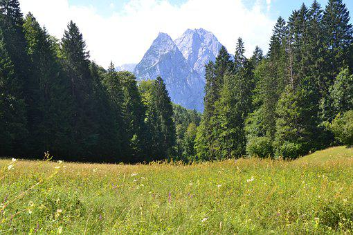 Pasture, Field, Forest, Mountains, Countryside, Alps