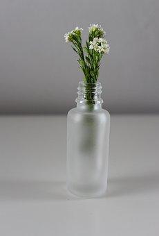 Flowers, Vase, Vegetation, Minimal, Flora, Home