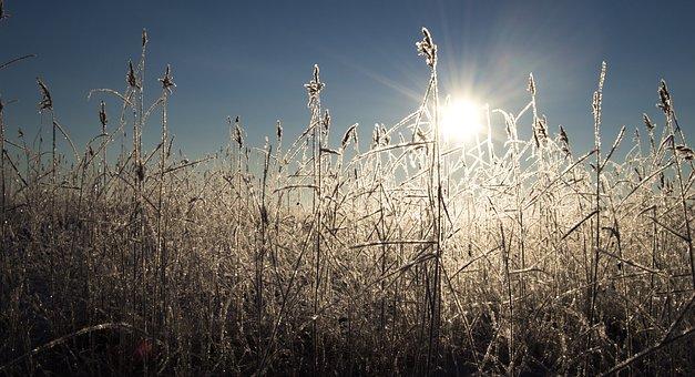 Grass, Frost, Sunrise, Icy, Frozen, Plants, Field