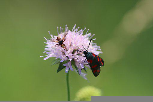 Butterfly, Flower, Wasp, Pollinate, Pollination