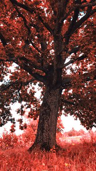 Oak, Tree, Leaves, Acorns, Branches, Factory, Seedling