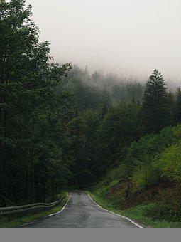 Road, Travel, Nature, Forest, Adventure, Outdoors