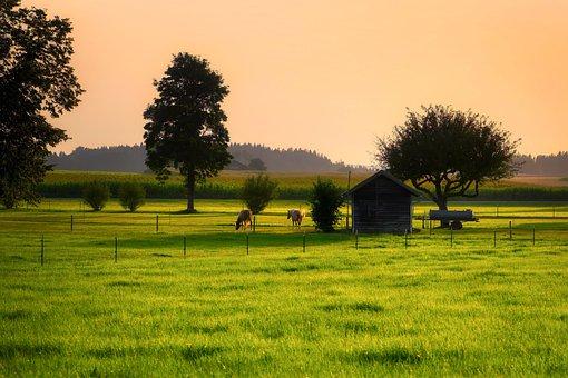 Cornfield, Grass, Meadow, Field, Trees, Paddock, Dusk