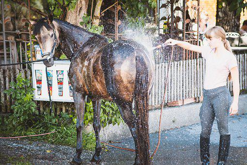 Horse, Water Hose, Wash, Pony, Animal, Equine, Water