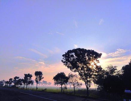 Morning, Sunrise, Field, Road, Trees, Silhouette, Fog
