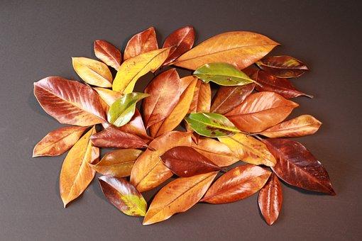 Fall, Leaves, Foliage, Decorative, Autumn, Natural