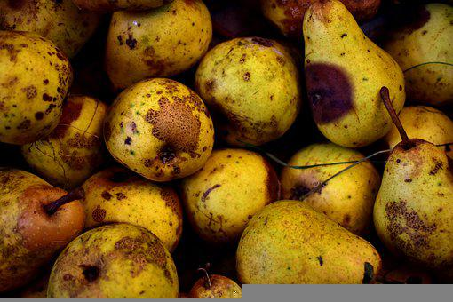 Pears, Fruits, Food, Rotten, Old, Aging, Rotting