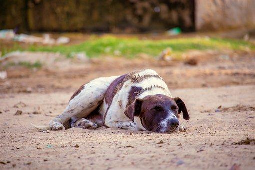 Dog, Pet, Canine, Animal, Lying, Sleeping, Fur, Snout