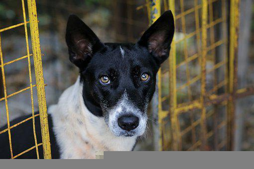 Dog, Pet, Canine, Animal, Fur, Snout, Mammal