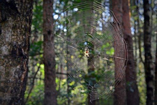 Network, Spider, Cobweb, Forest, Orb Web, Arachne