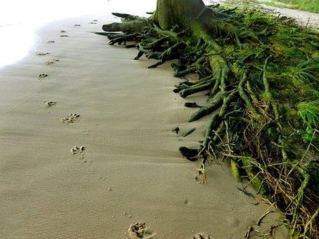 Animal Tracks, Dog, Dog Track, Sand, Elbe Beach, Traces