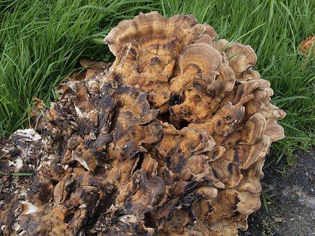 Mushroom, Spores, Mushroom Genus, Fruiting Bodies