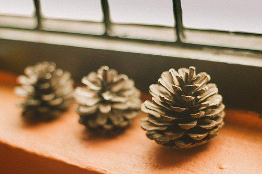 Pine Cone, Light, Shadow, Window Boxes, The Wall