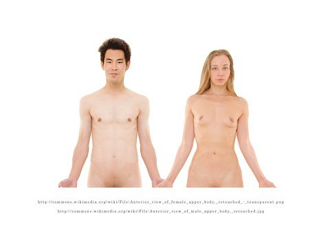Naked, Man, Woman, Human, Breast, Bosom, Section