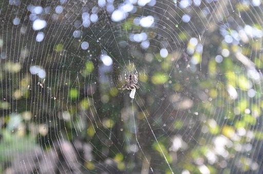 Spider, Cobweb, Network, Nature, Close, Disgust