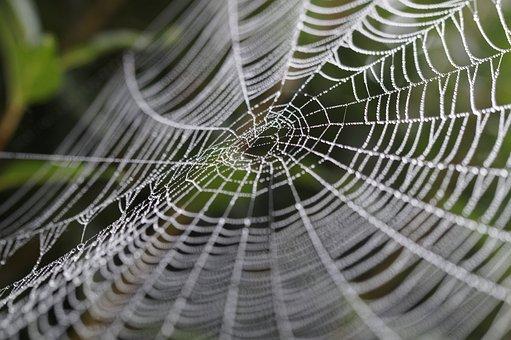 Cobweb, Wheel Spider, Network, Orb Web, Dewdrop, Drip