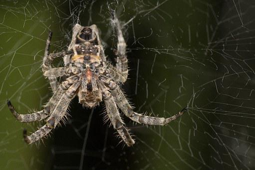 Madagascar, Macro, Spider, Upside Down, Under, Silk