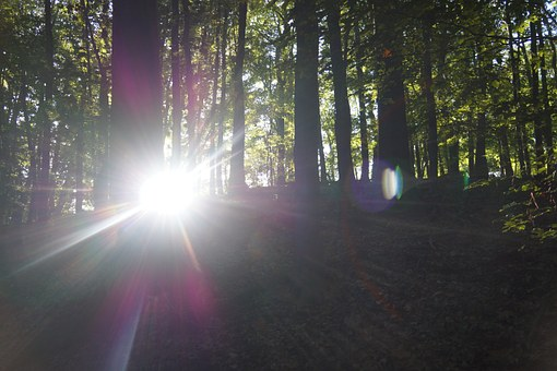 Sun, Sunbeam, Aperture Stain, Rays, Nature, Forest
