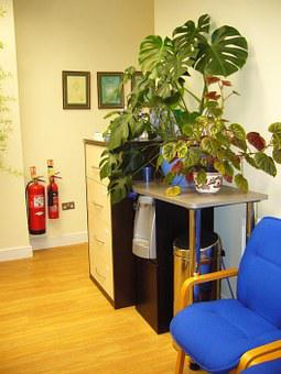 Waiting Area, Chairs, Indoor Plants, Waiting Room