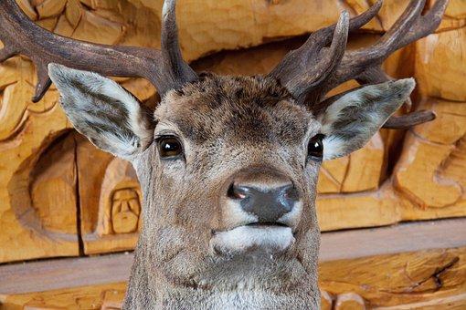 Animal, Big, Decoration, Deer, Eyes, Ears, Fur, Head