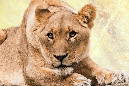 Lioness, Predator, Animal World, Cat, Africa, Animal