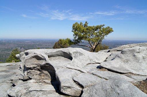 Stone Floor, Rock, Tree, Nature, Landscape, Stone