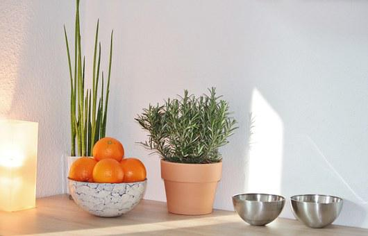 Still Life, Decoration, Culinary Herbs, Oranges, Fruits