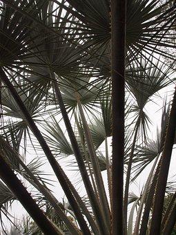 Leaves, Palm, Palm Tree, Tropical, Pattern, Ferns