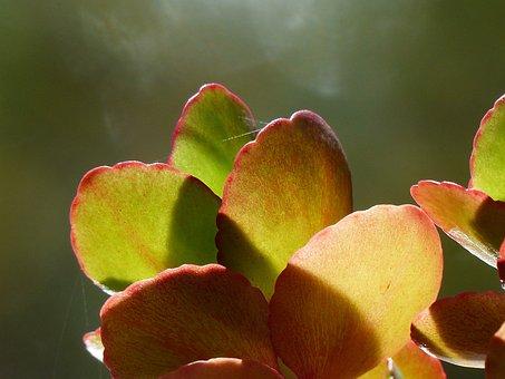 Plant, Flower, Leaves, Room Plants, Back Light