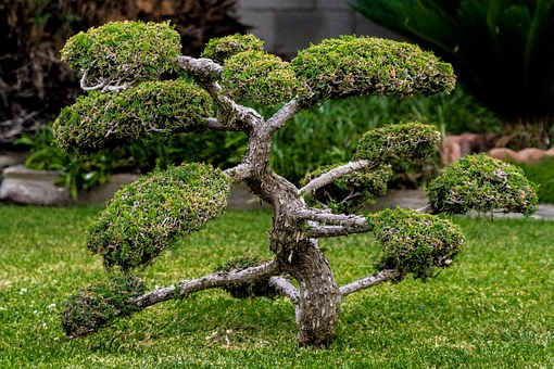 Bonsai, Miniature, Plant, Tree, Small, Gardening