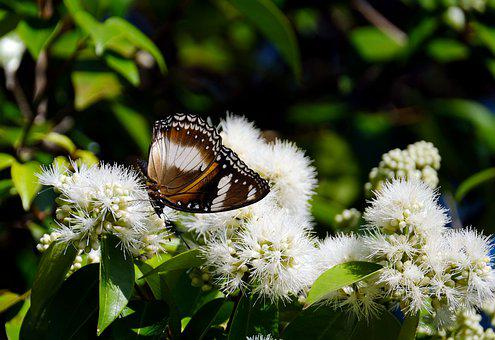Blue Moon Butterfly, Butterfly, Flowers, Insect, Wings