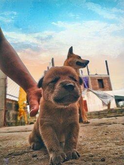 Dog, Puppy, Pet, Canine, Animal, Fur, Snout, Mammal