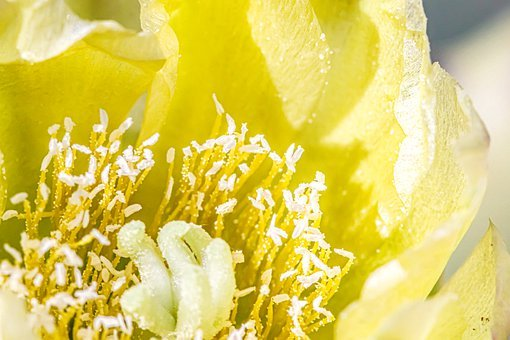 Flower, Stamen, Pollen, Botany, Growth, Bloom, Blossom
