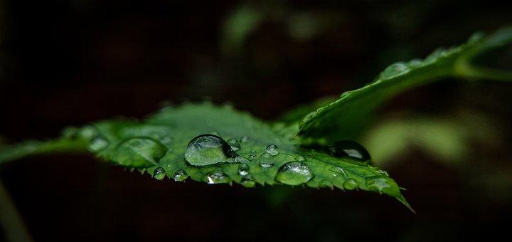 Leaf, Drops, Rain, Droplets, Surface, Water, Wet